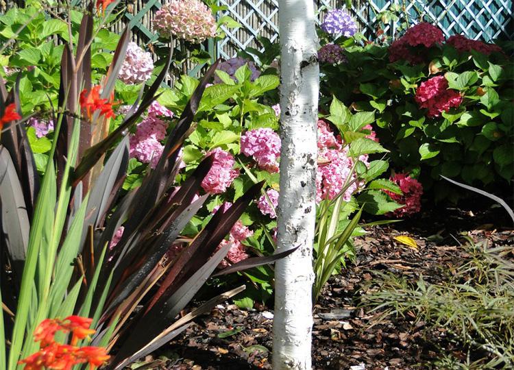 Couleurs et jardin ni paysagiste conseil ni p pini riste for Conseil plantation jardin